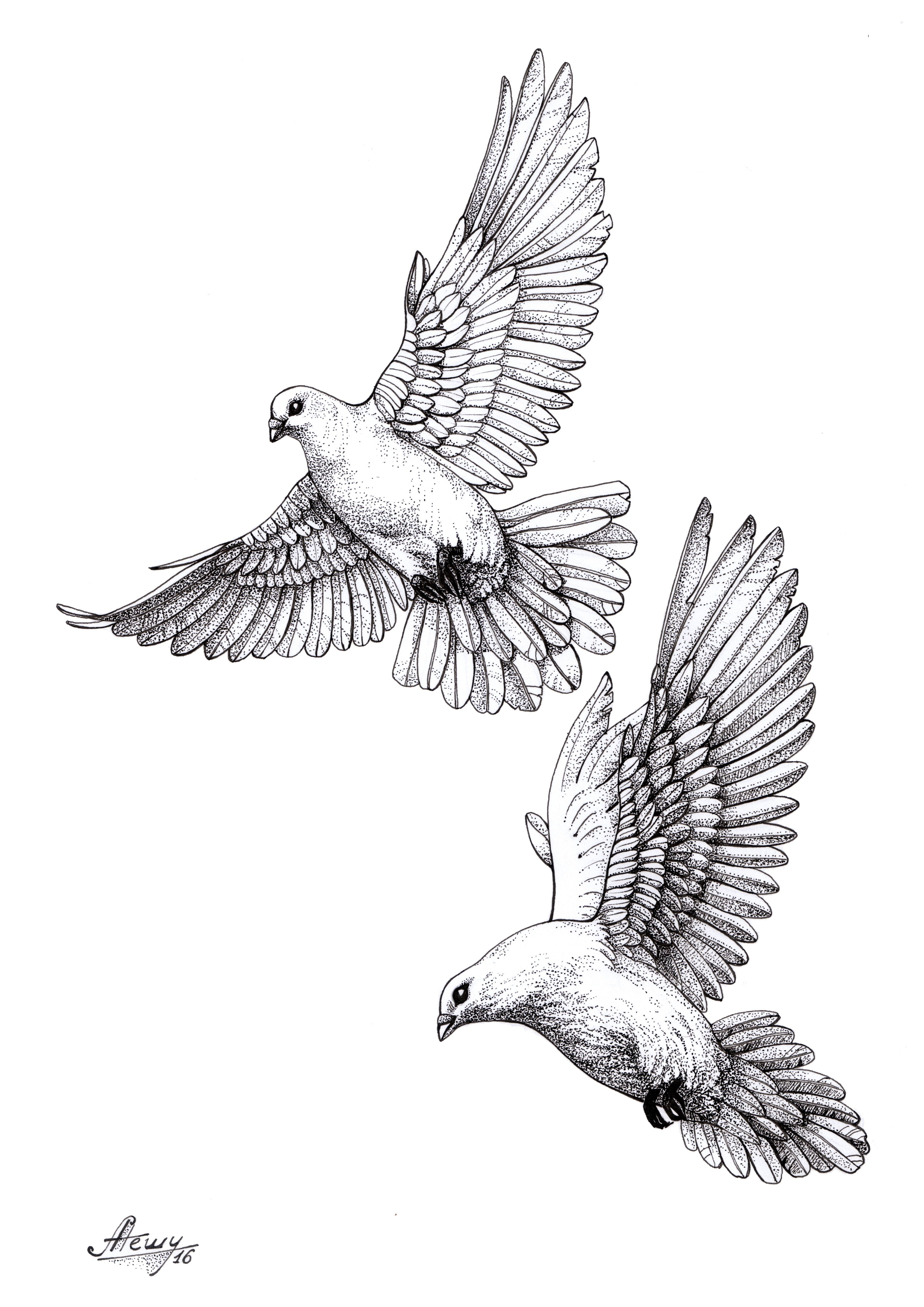 Sparrow Sketch Tattoo At Paintingvalley Explore Collection Of throughout sizing 3307 X 4677