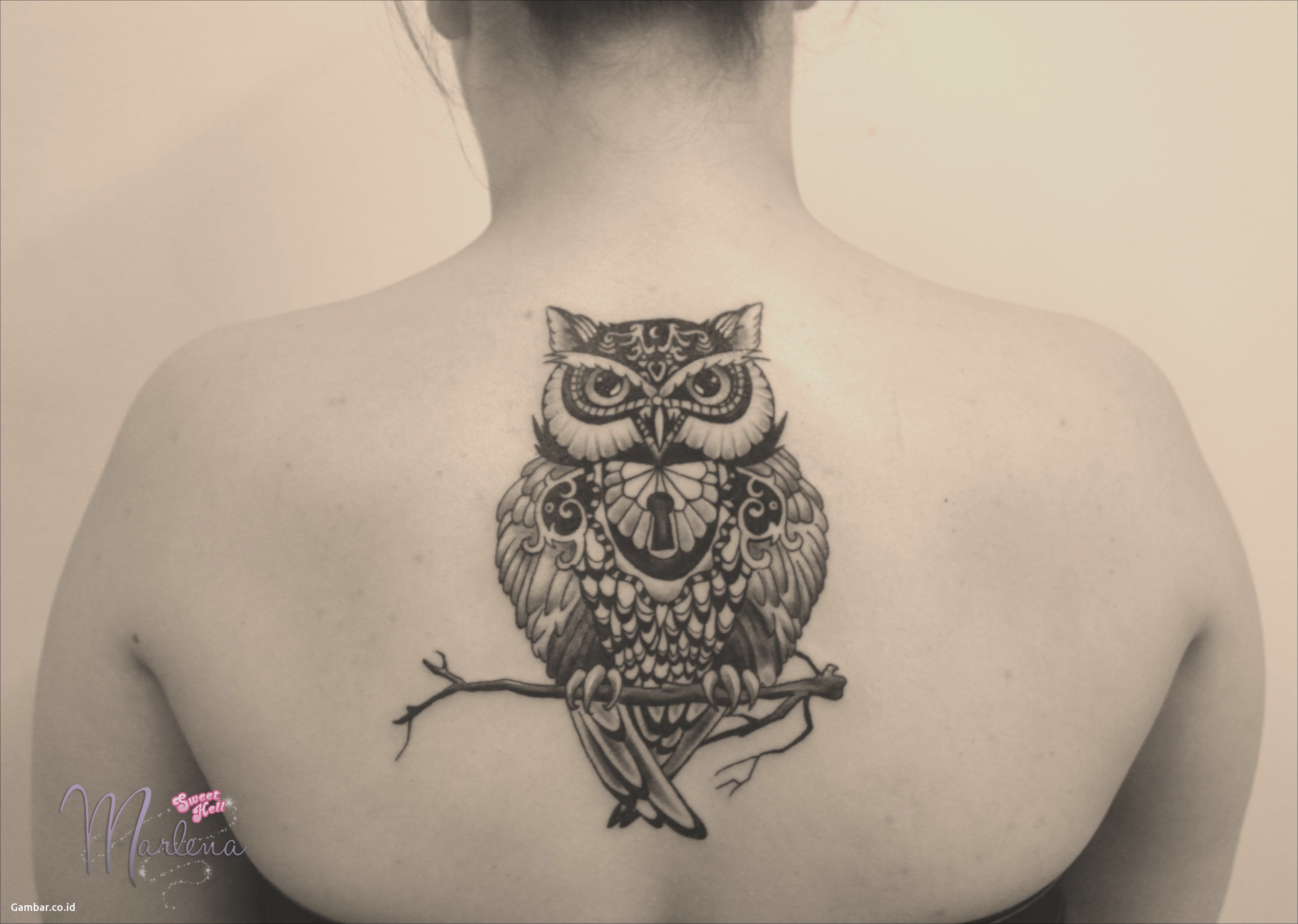 Download Gambar Owl Tattoo On A Back Between Shoulder Blades Black inside dimensions 4852 X 3456